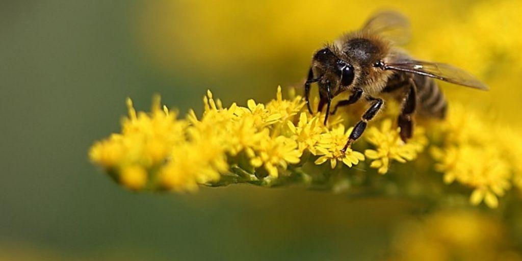 bumble bee on yellow flow