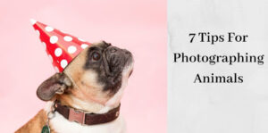 How To Photograph Animals - Bulldog in Party Hat