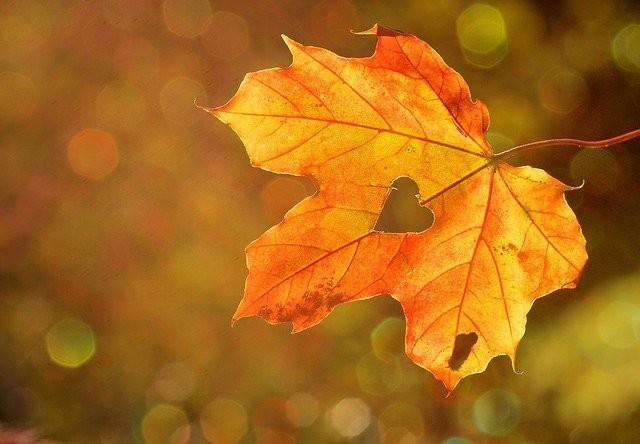 orange leaf with blurred background